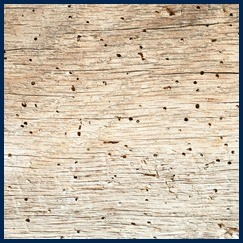 Timber treatments