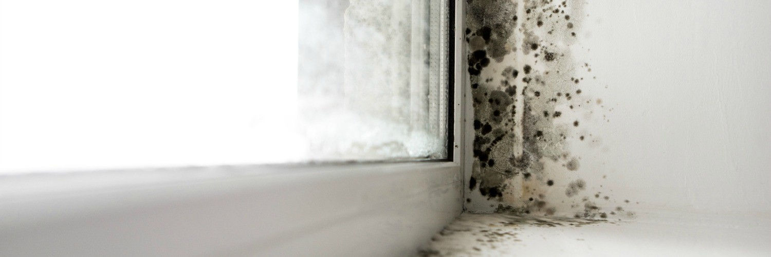 Black Mould Removal Yorkshire